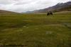 day7 photo - high altitude pasture land of nimaling